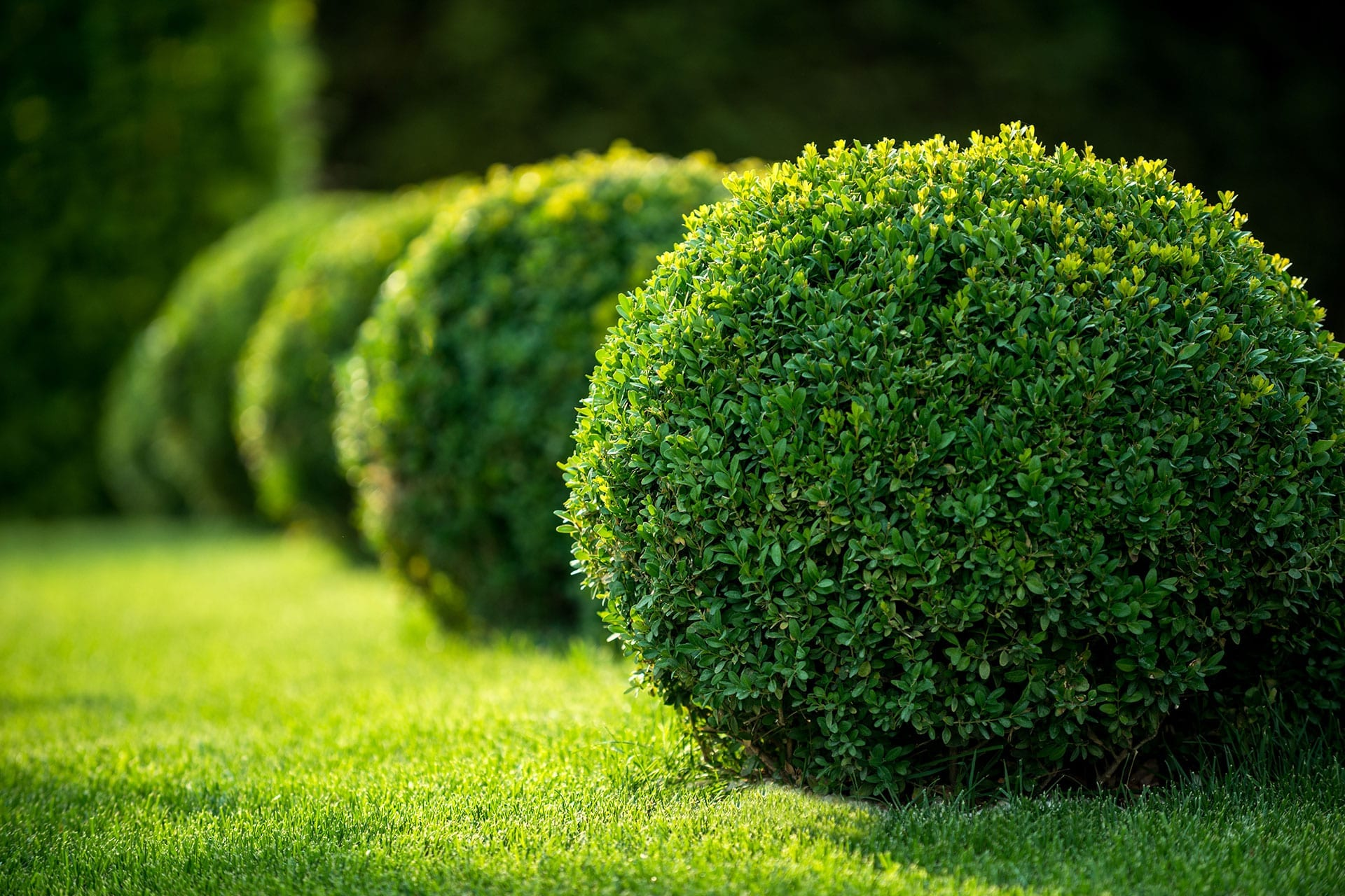 Best Shrubs For Colorado Colorado Springs Front Range Arborists
