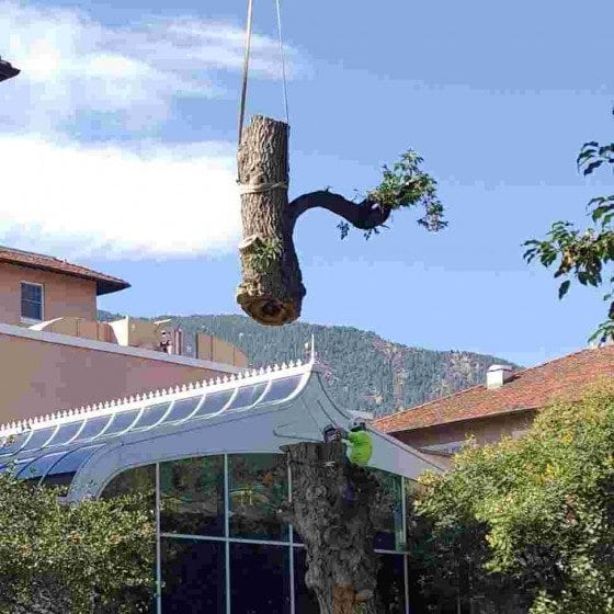 Tree Removal | Gallery | Front Range Arborists | Colorado Arborists