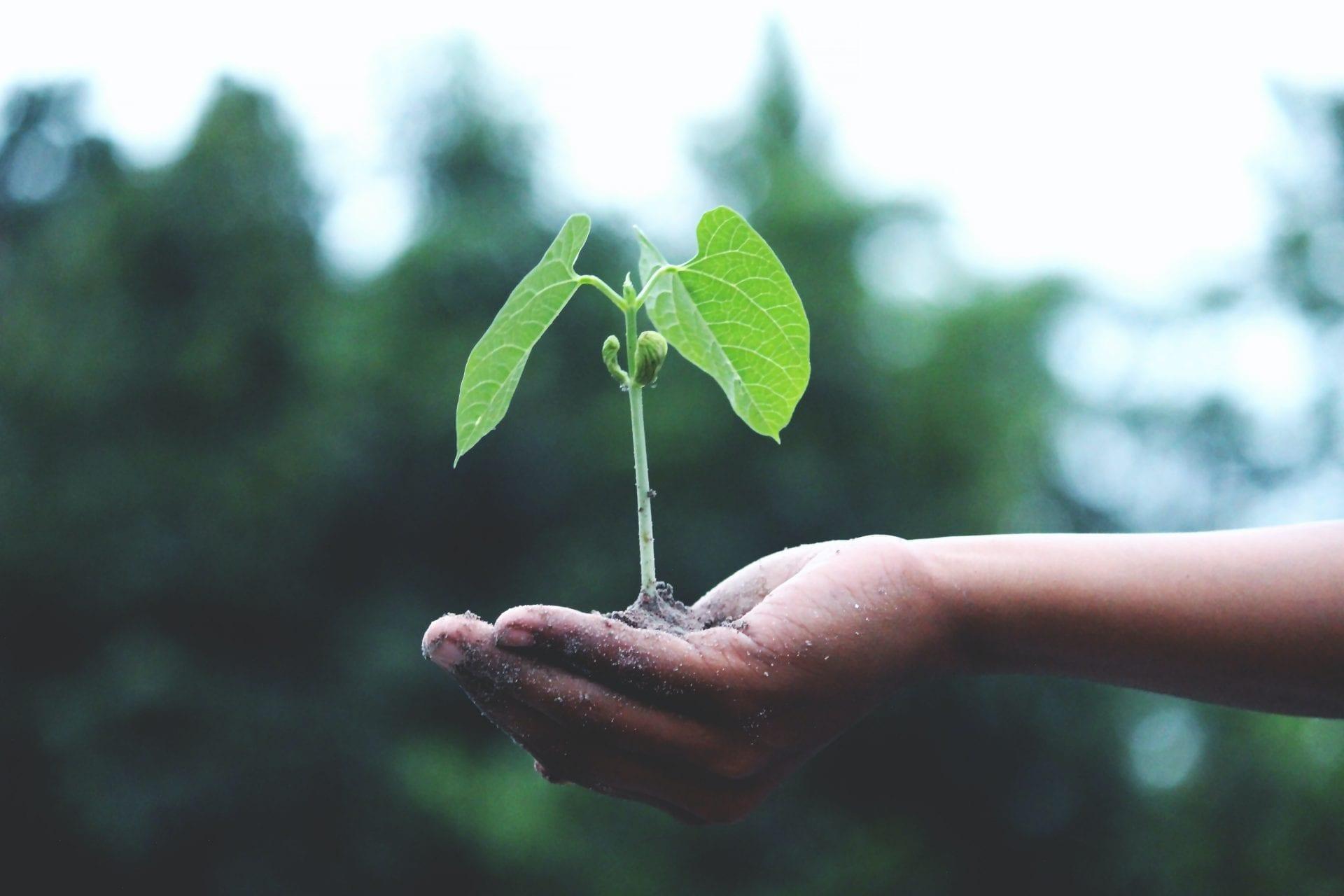 Proper Tree Planting