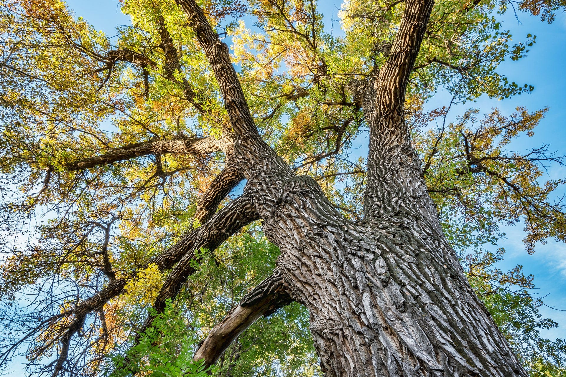 Tips to Protect Your Trees During the Summer | Blog | Front Range Arborists
