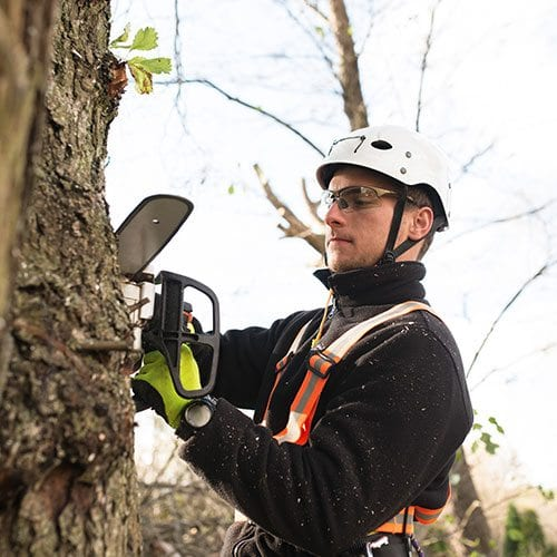 Certified Professional Arborists | Our professional staff looks forward to serving the Pikes Peak Region | Front Range Arborists