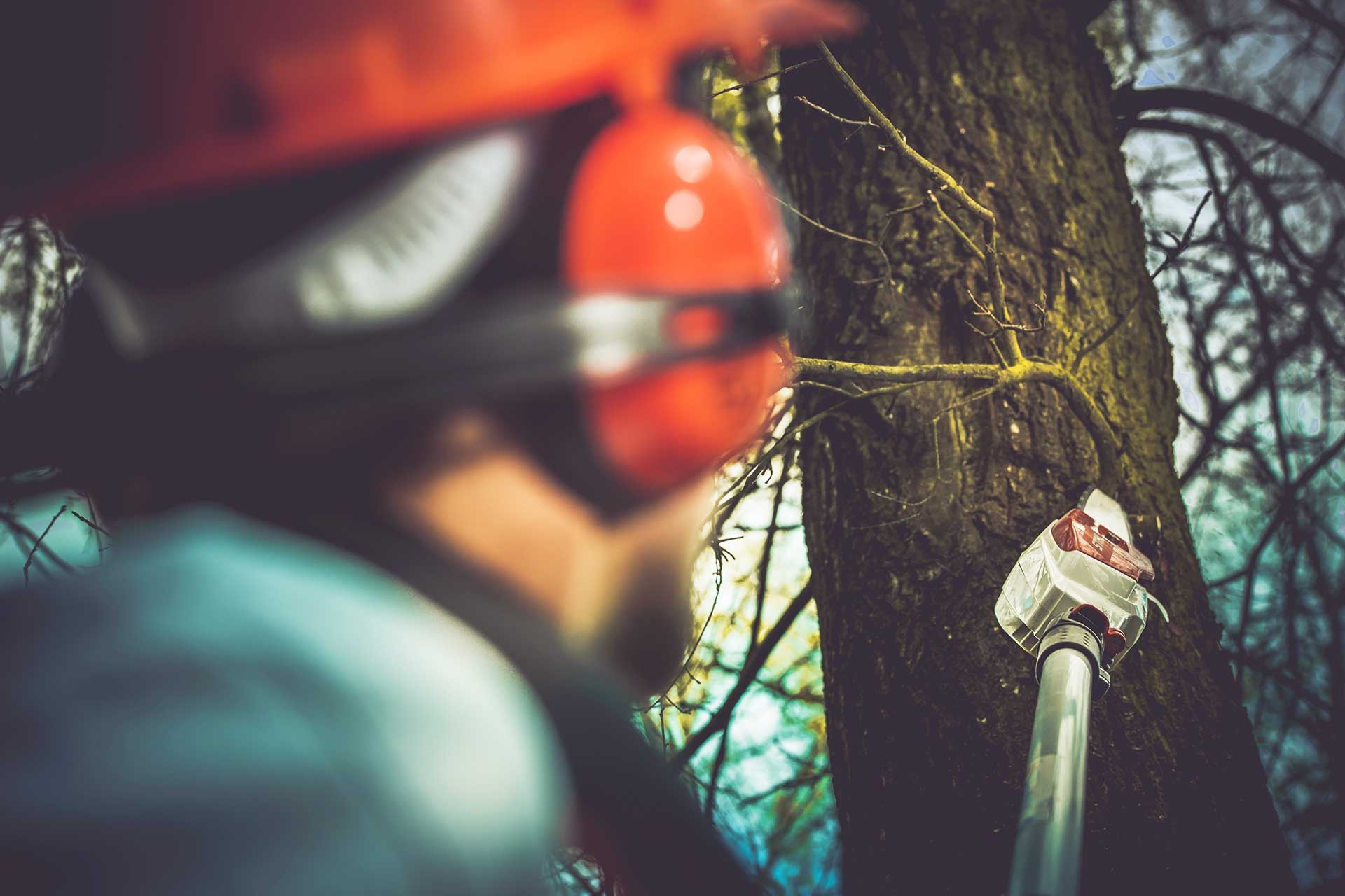 Hire Certified Arborists for Tree Care | Blog | Front Range Arborists