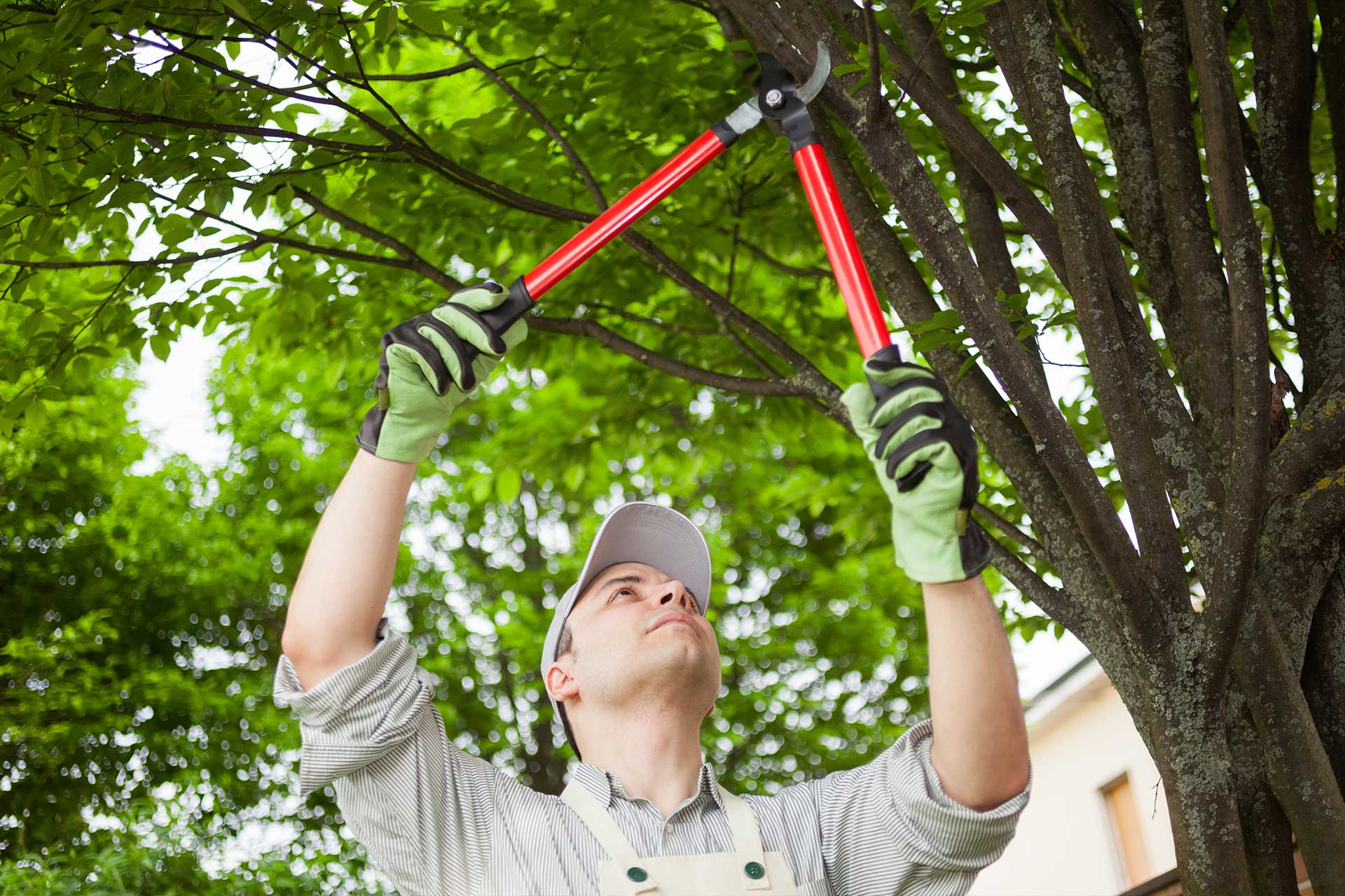 The Dos and Don'ts of Tree Pruning | Blog | Front Range Arborists
