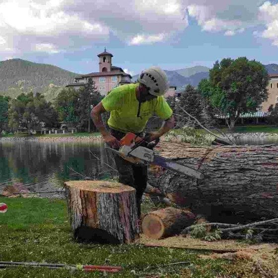 Cutting Tree Stump | Gallery | Front Range Arborists | Colorado Arborists