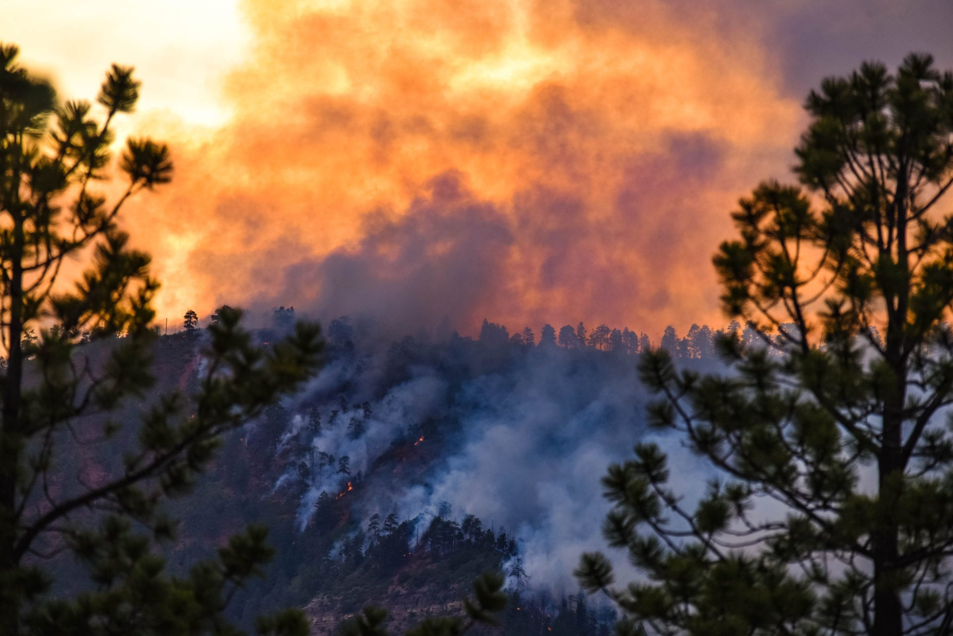 protect home wildfires