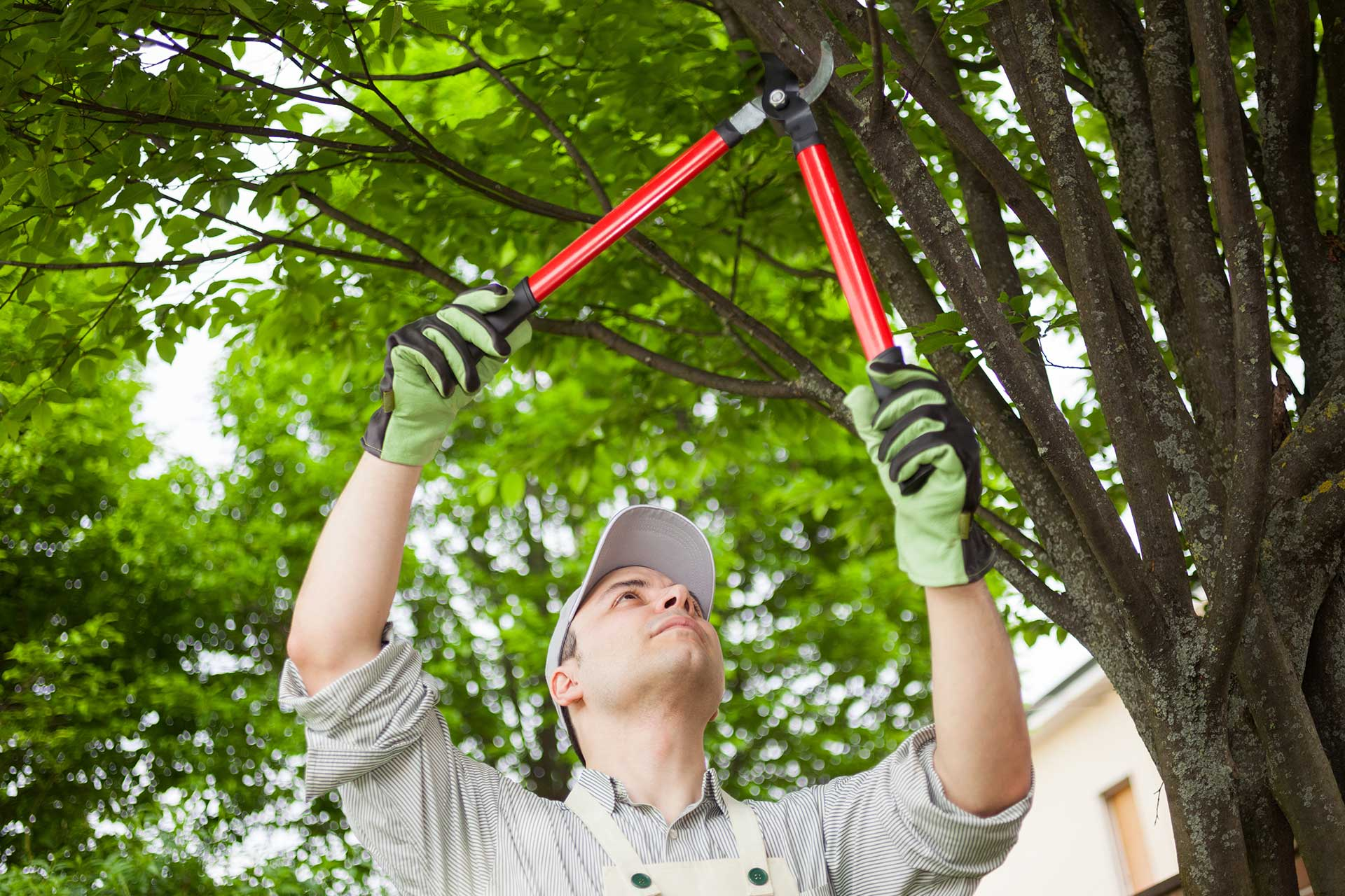 Pruning Trees in the Winter | Colorado Springs | Front Range Arborists