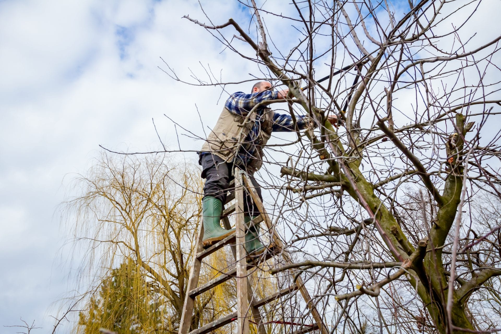 Pruning Your Trees and Shrubs | Blog | Front Range Arborists