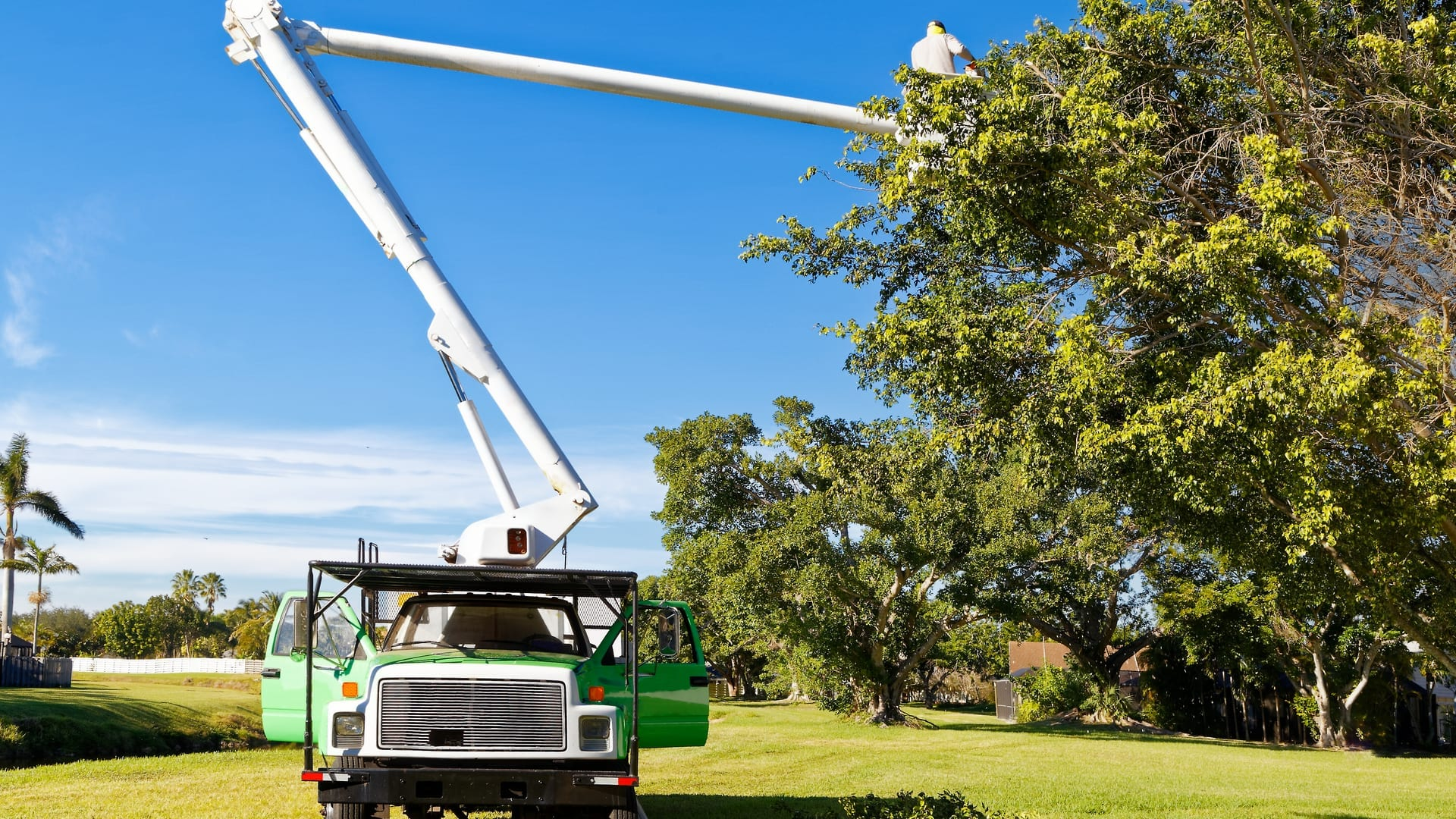 why you should hire an arborist