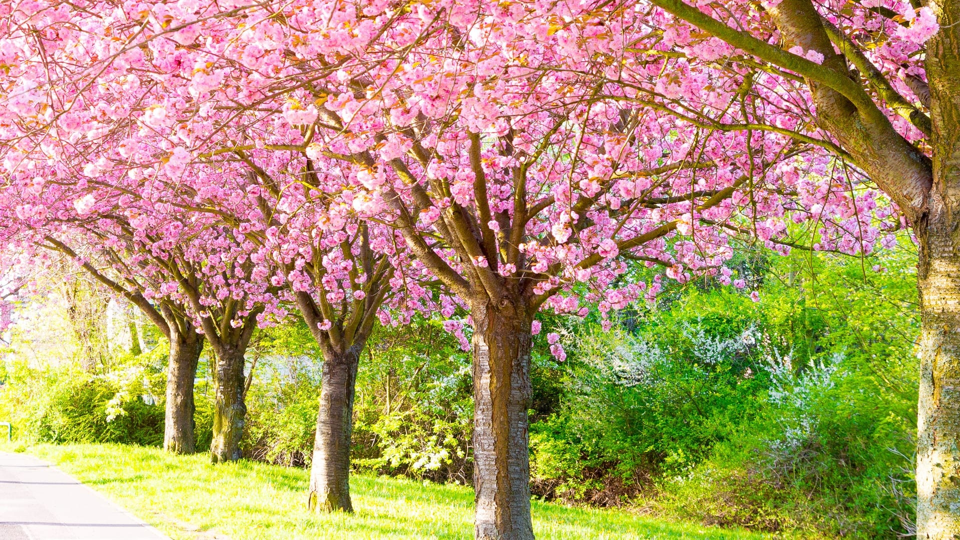 Best Flowering Trees For Colorado Front Range Arborists