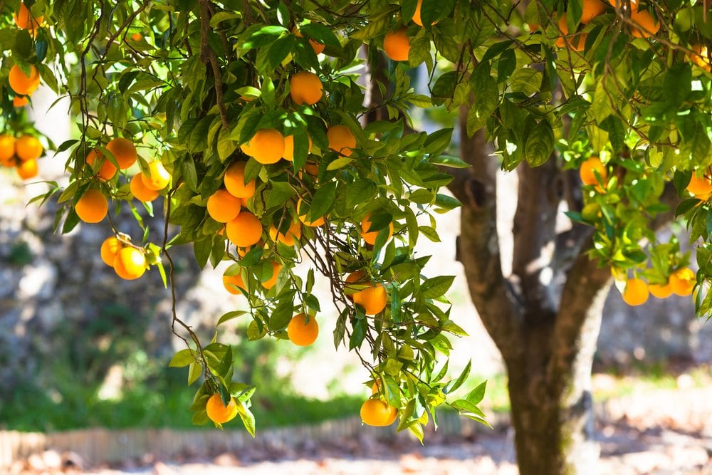 When to Trim Fruit Trees | Colorado | Front Range Arborists