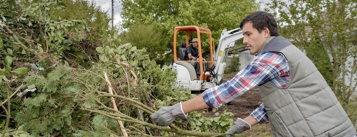 Why You Should Never Remove A Tree Yourself | Front Range Arborists | Tree Removal in Colorado