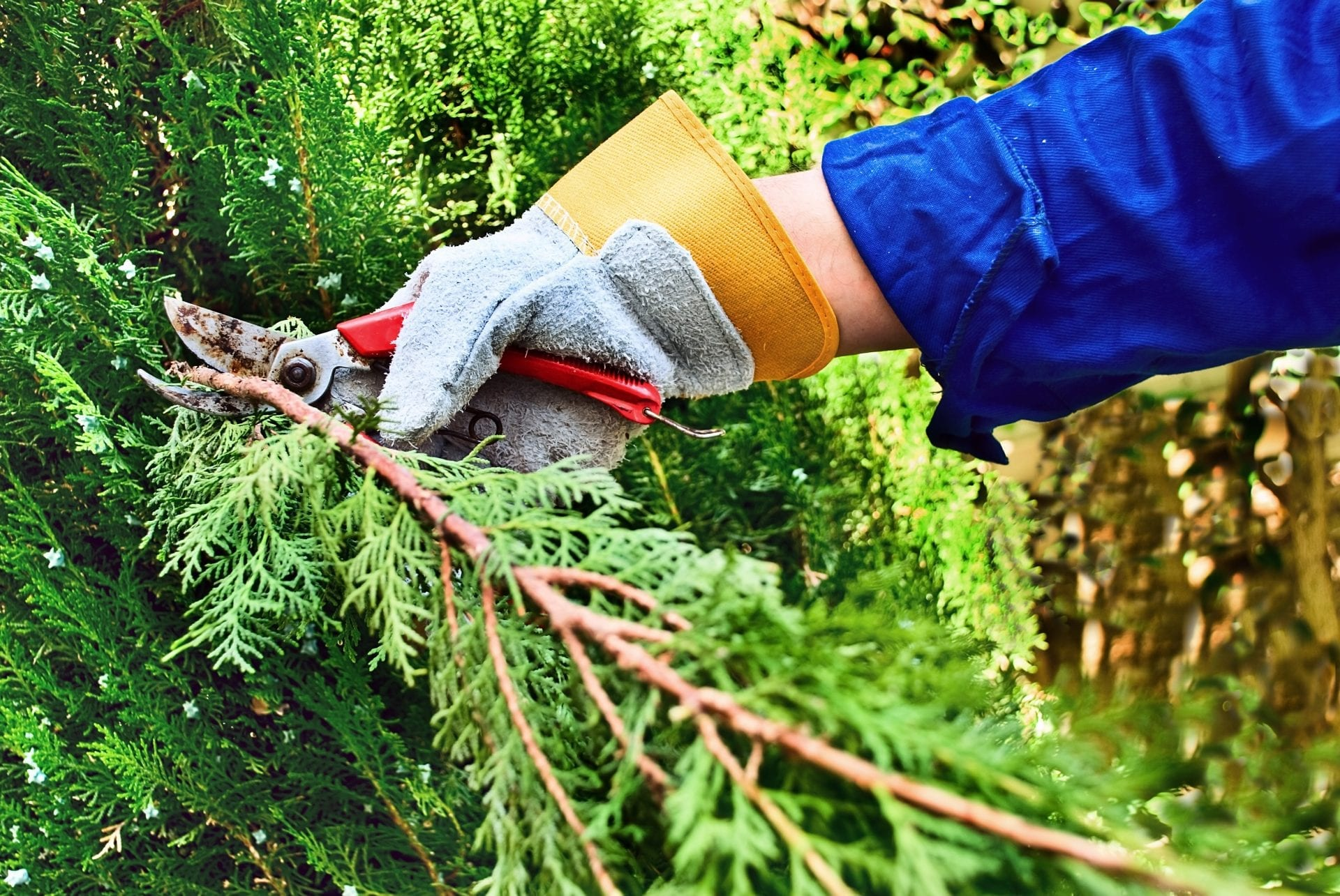 How Often to Prune Your Trees | Blog | Front Range Arborists