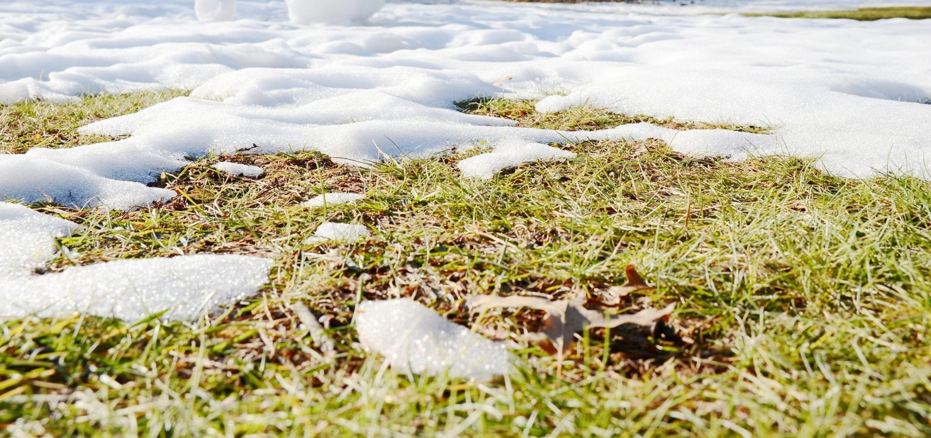 Caring For Your Lawn In Winter | Blog | Front Range Arborists