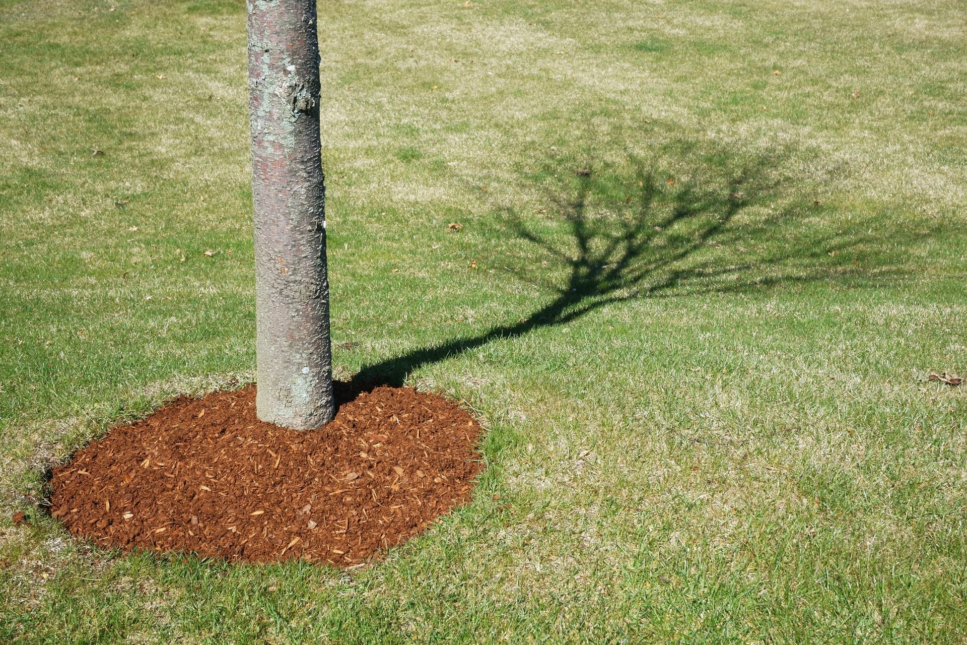 How Important Is It To Mulch? | Blog | Front Range Arborists
