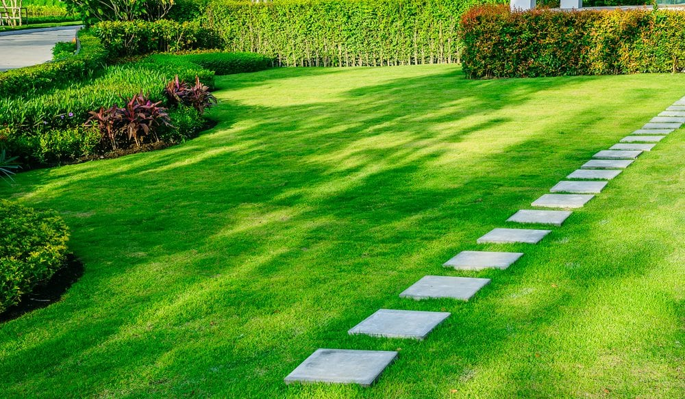 How to Care For Your Lawn | Colorado Springs | Front Range Arborists