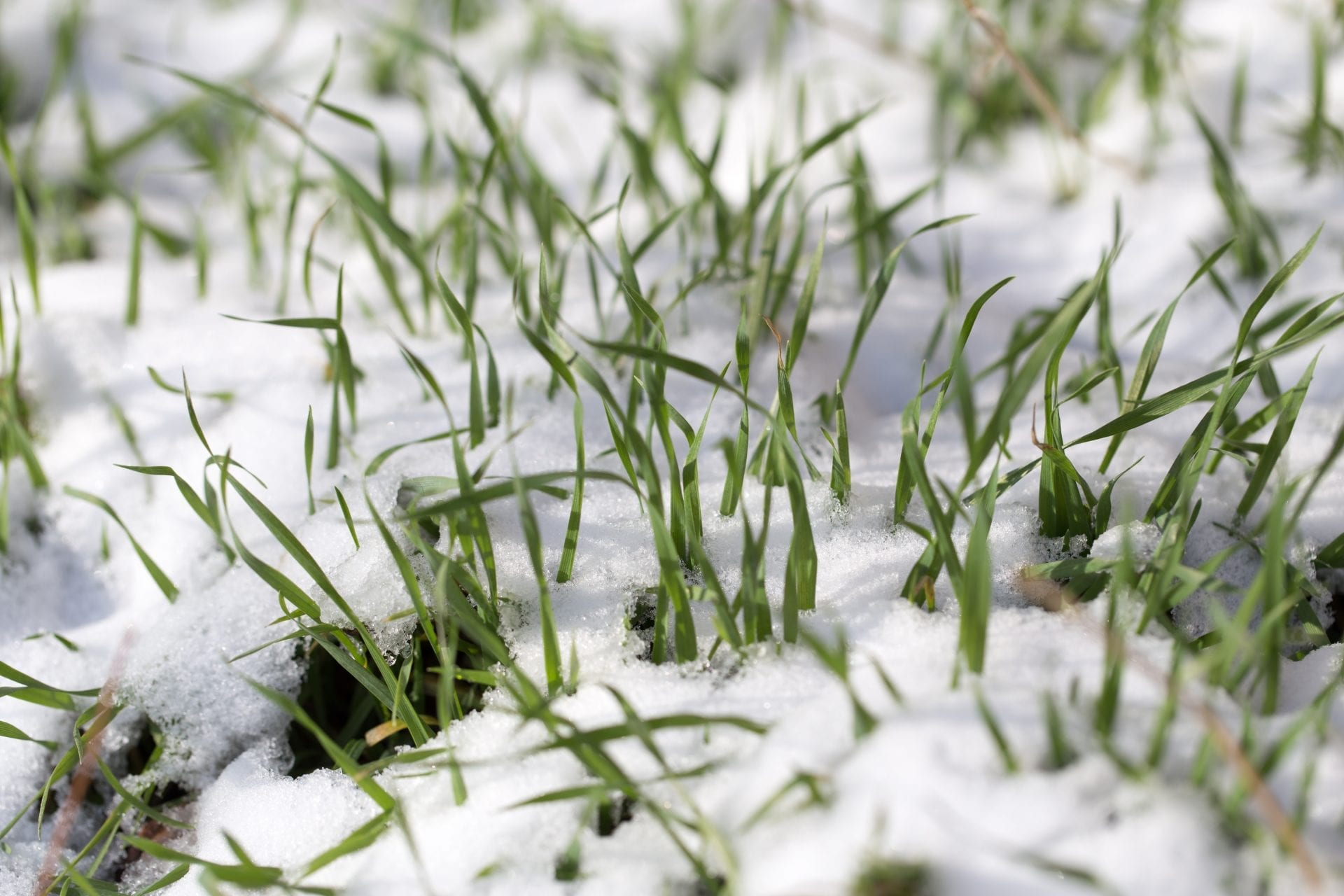Lawn Care Tips For A Better Lawn | Blog | Front Range Arborists