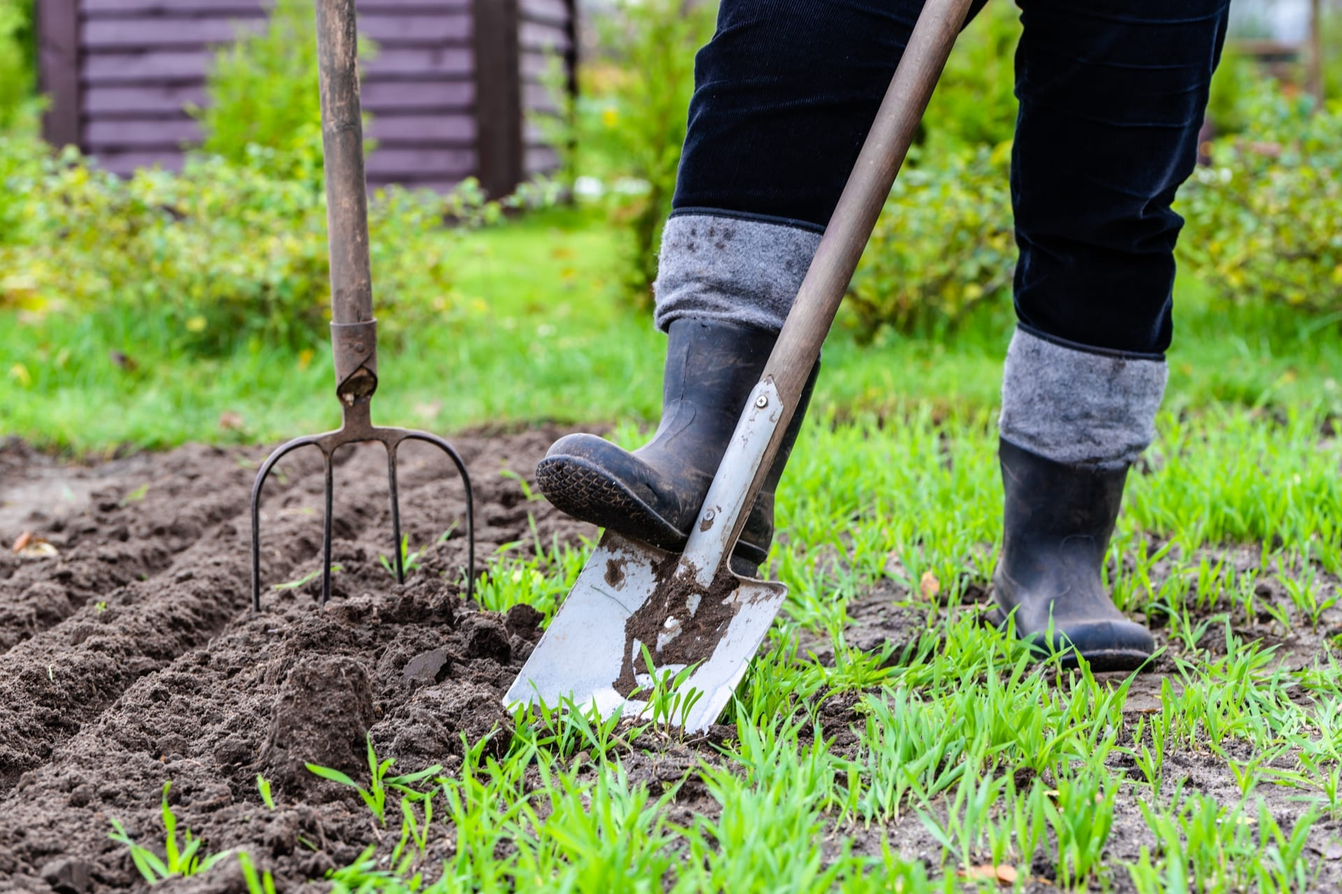 Amend The Soil For Your Backyard Plants