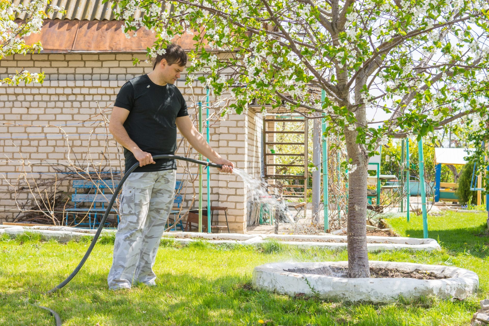 Know When Your Trees Need Water | Blog | Front Range Arborists