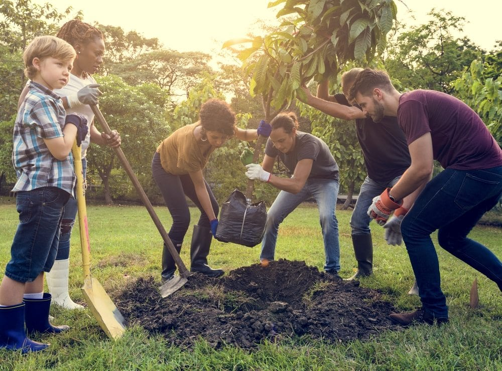 Newly Transplanted Trees | Front Range Arborists