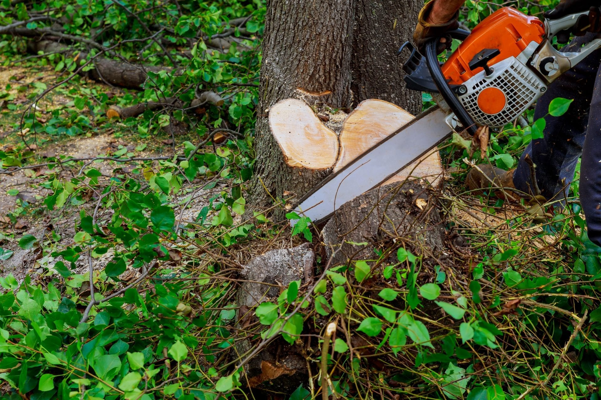Know When It's Time to Remove a Tree | Blog | Front Range Arborists