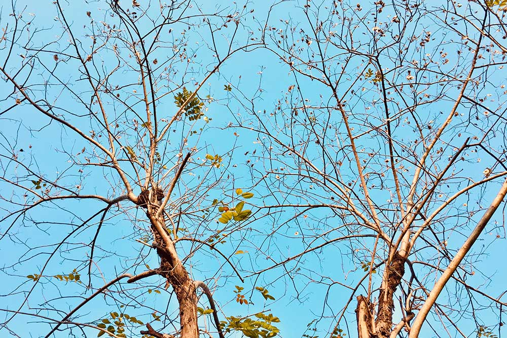 Protecting Your Trees During A Drought | Blog | Front Range Arborists