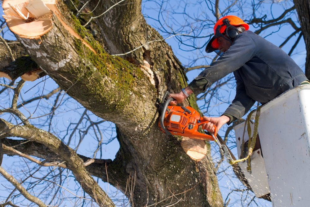 Safety Tips Around Tree Pruning | Front Range Arborists