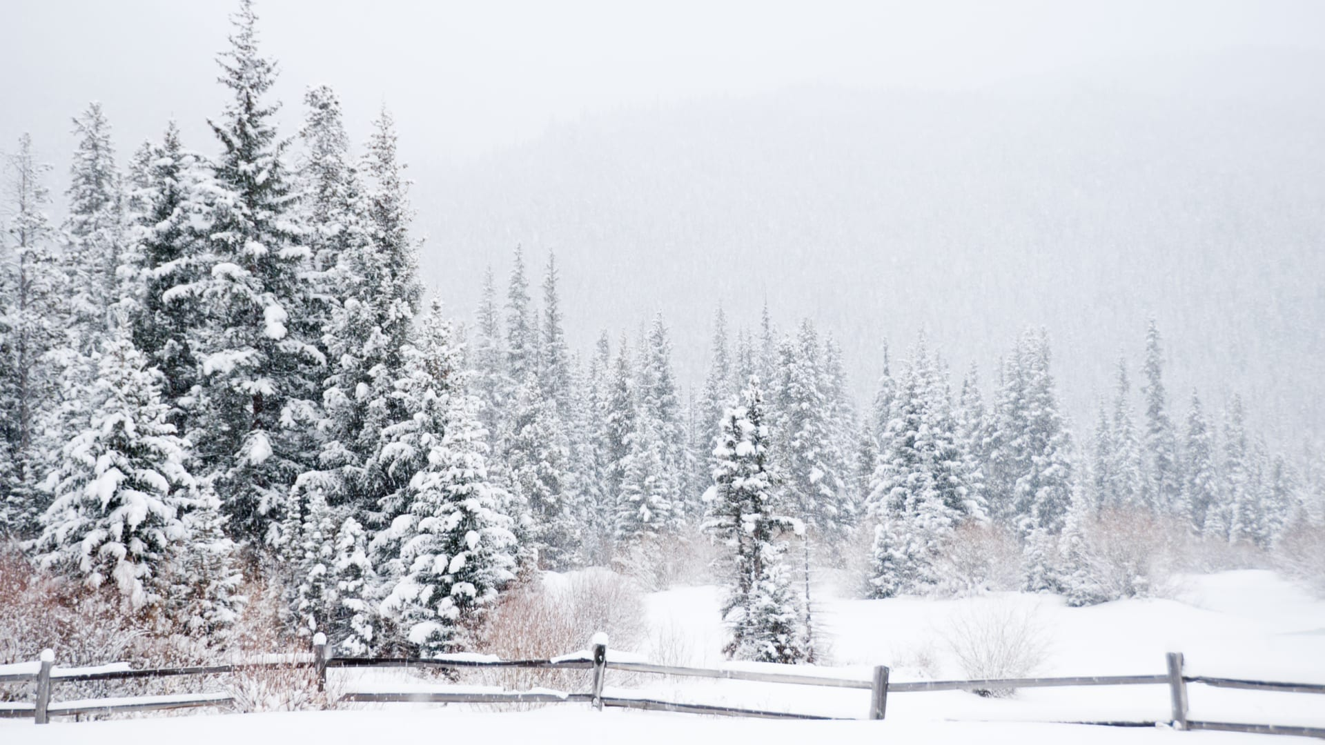 trees in winter prevent damage