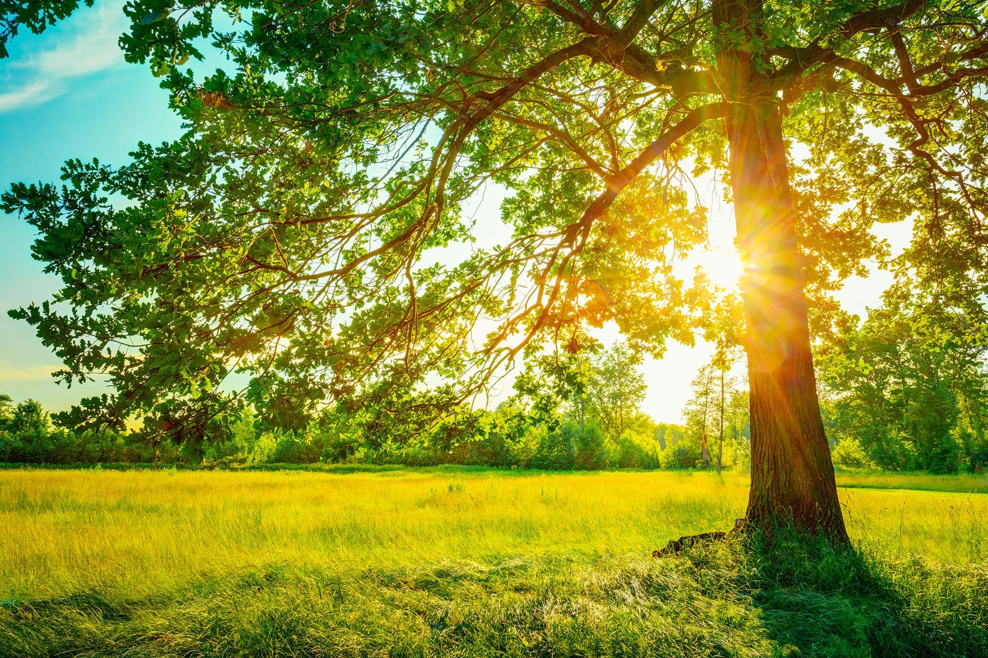 How Much Sun Do Your Trees Need? | Front Range Arborists