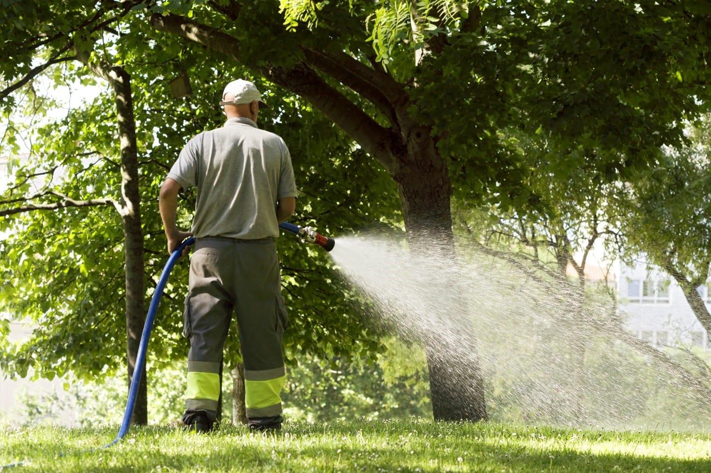 tree care myths