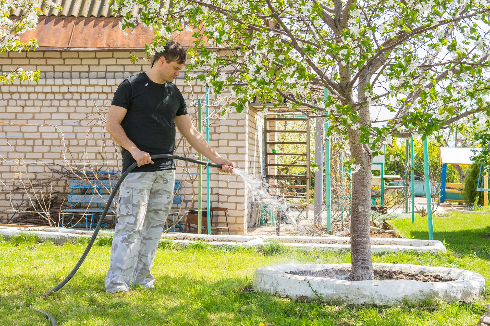 When to Water Your Trees | Blog | Front Range Arborists