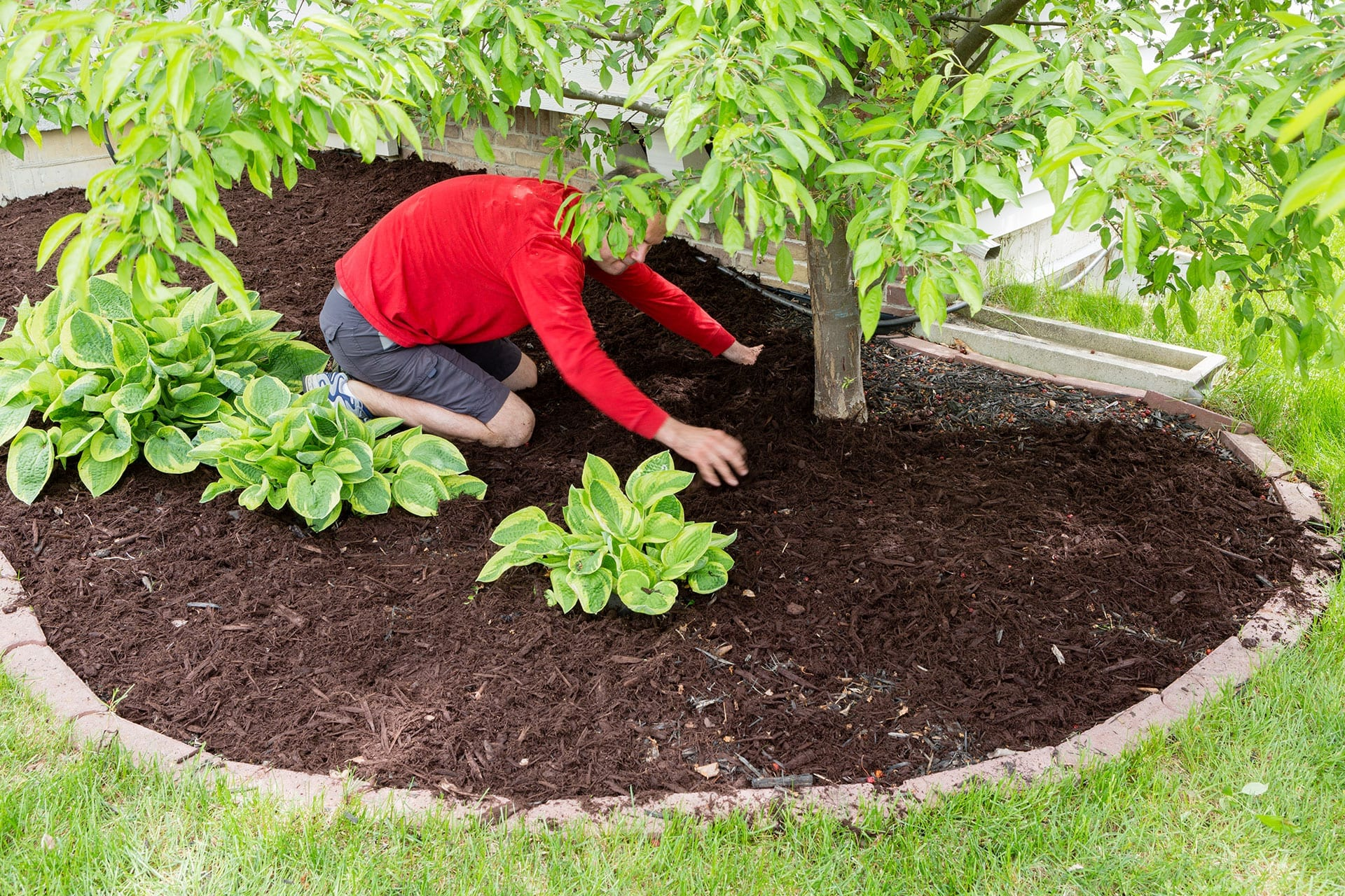 Why Mulch is Important | Winter Tree Care | Front Range Arborists