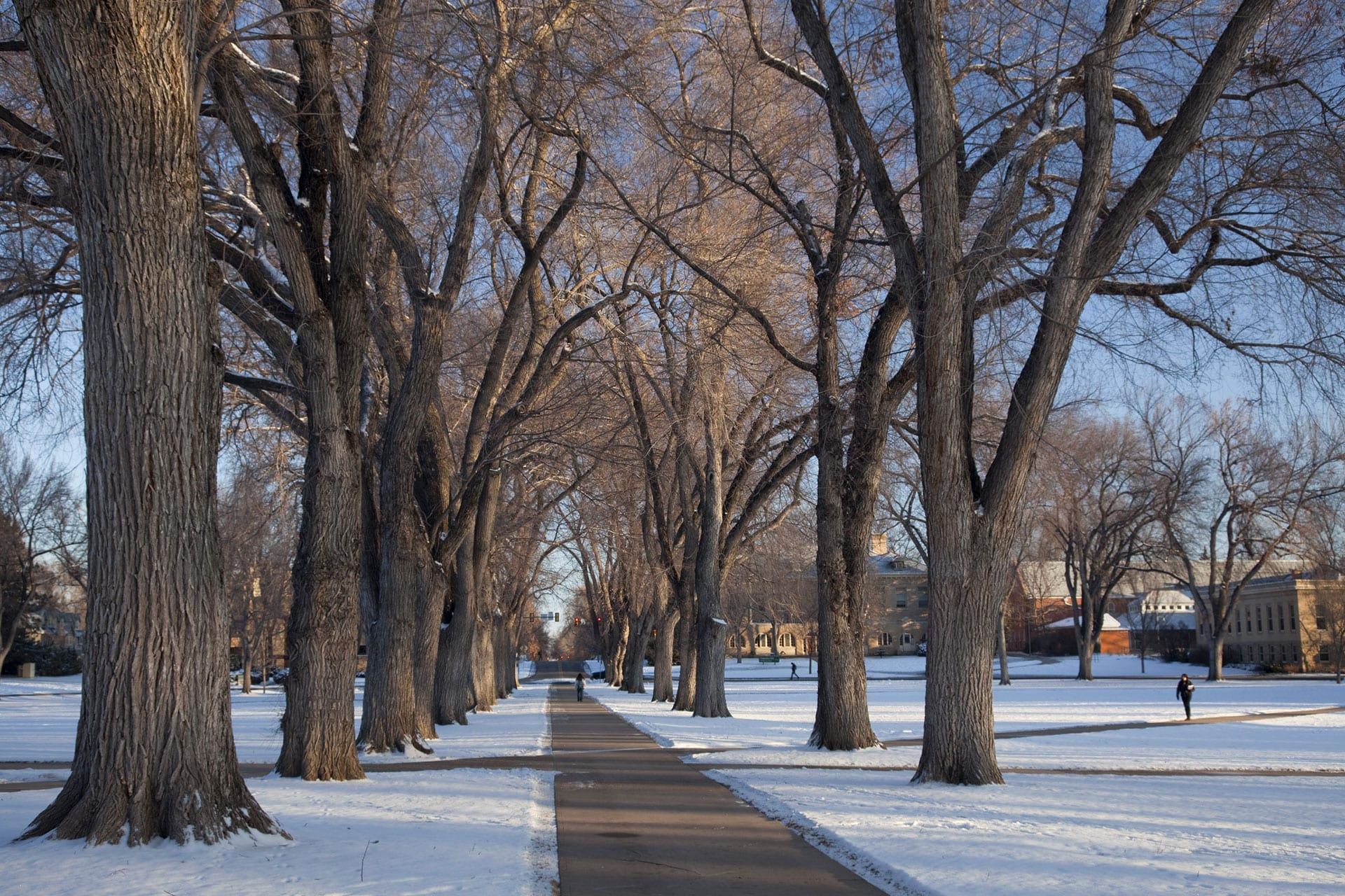 Winter Time Tree Safety | Certified Arborists | Front Range Arborist